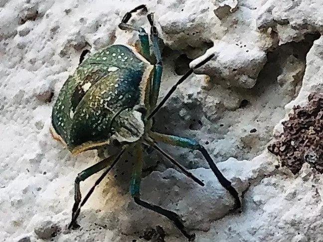 bug pest control service