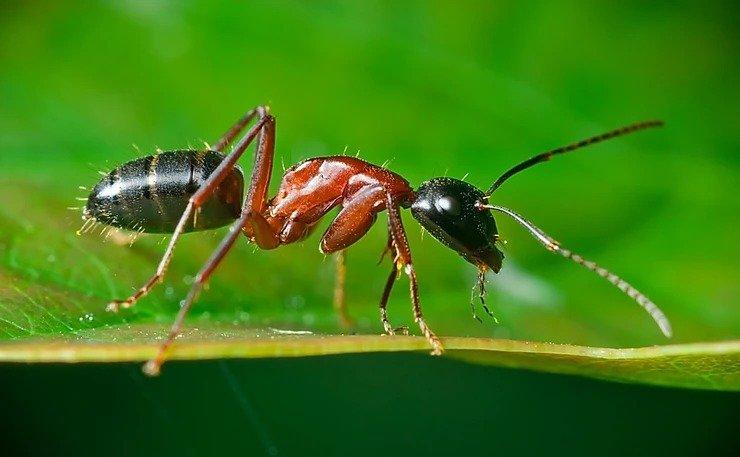 An ant crawling on a leaf