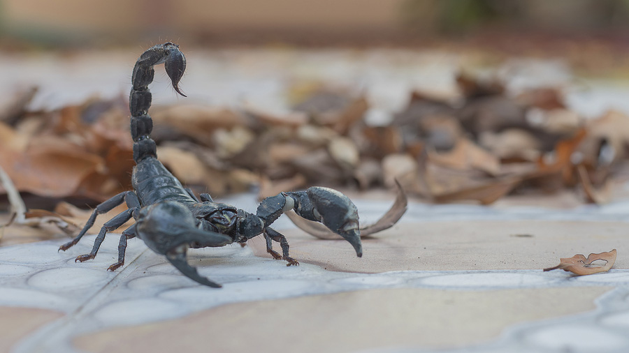Scorpion Control Outside of a home