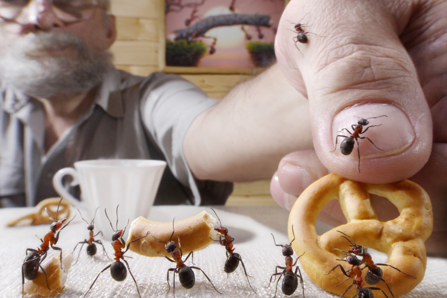 Ants crawling on a man's hand when he is picking up a pretzel