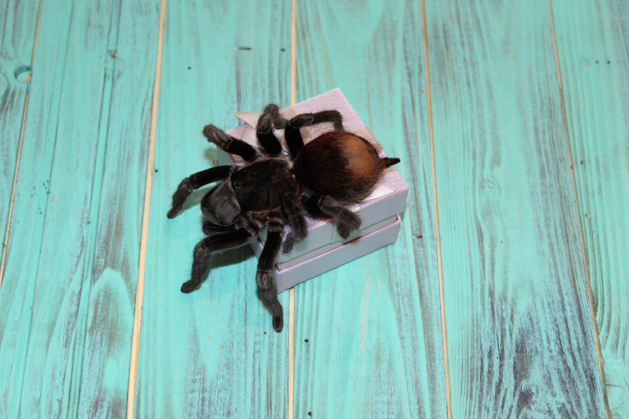 spider on teal wooden box
