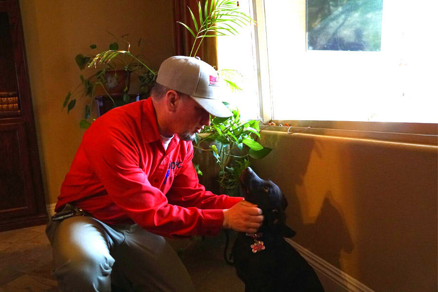 The owner of Dr Death Pest Control, a pet-friendly pest control service, petting a dog inside