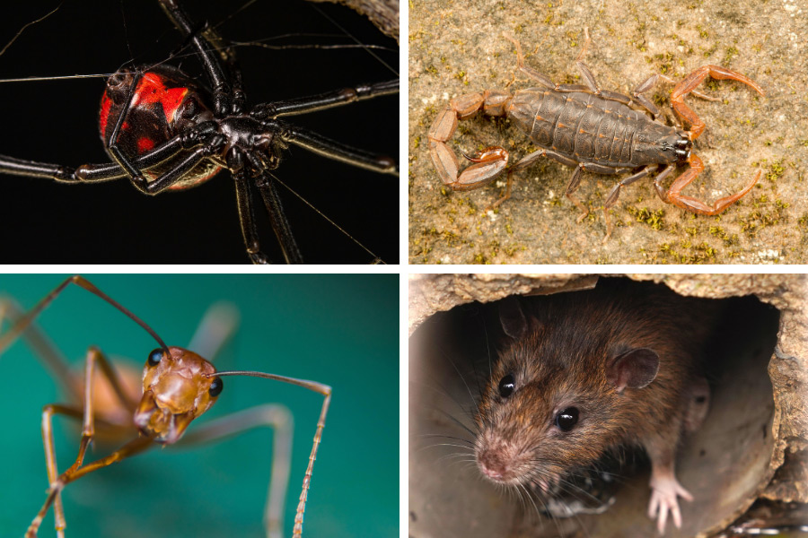 4 Creepy Pests to Watch Out For in Las Vegas
