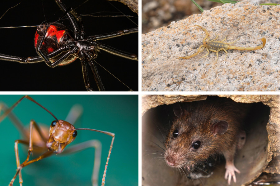4 creepy pests in the Las Vegas Valley