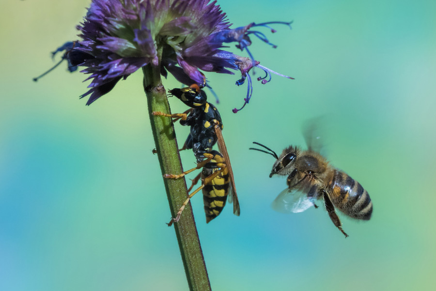 A bee and wasp near a flower