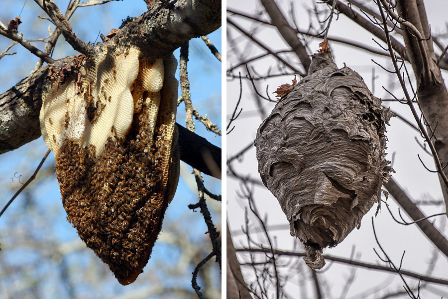Different types of nests