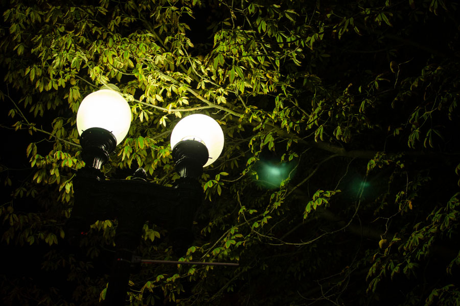 Two light bulbs that will attract bugs