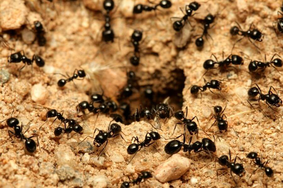ant colony entrance1